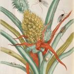 Merian, Maria Sybilla (1647-1717) Histoire Generale des Insectes de Surinam et Toute L'Europe. Paris: Desnos, 1771 (Lot 214, Estimate $45,000-$65,000)