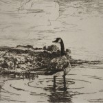 Frank Weston Benson (American, 1862-1951) Canada Goose, 1917 (Lot 179, Estimate $300-$500)